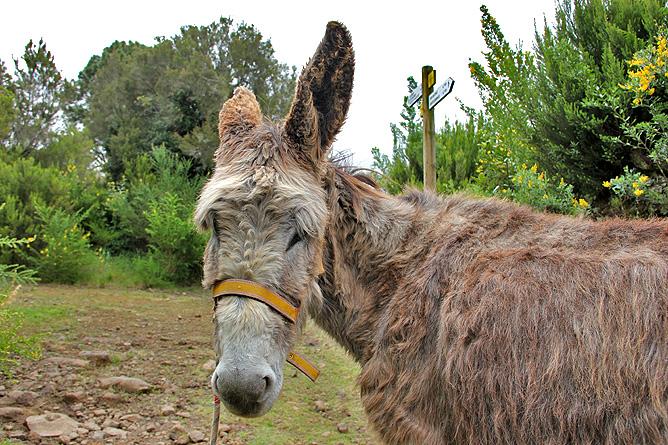 esel-wandern-burros-de-la-luz-la-palma-garafia-10
