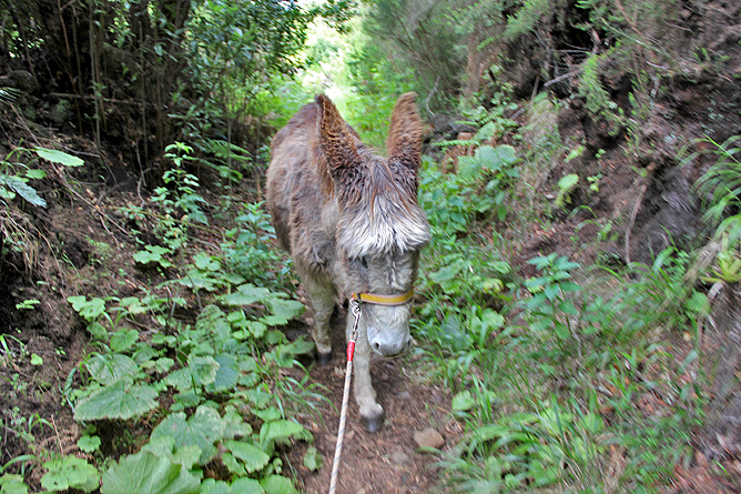 esel-wandern-burros-de-la-luz-la-palma-garafia-15