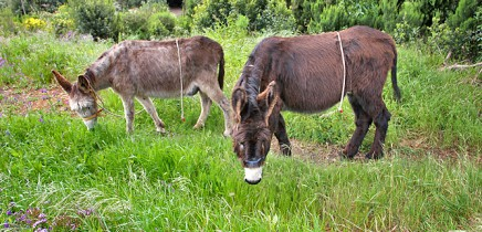 esel-wandern-burros-de-la-luz-la-palma-garafia-21