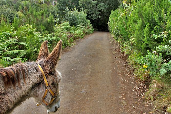 esel-wandern-burros-de-la-luz-la-palma-garafia-23