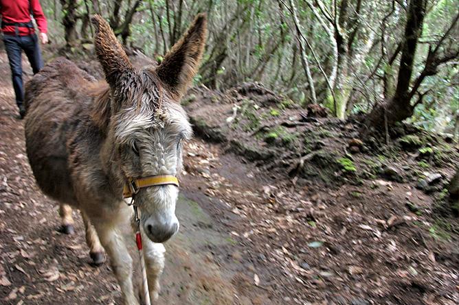 esel-wandern-burros-de-la-luz-la-palma-garafia-29