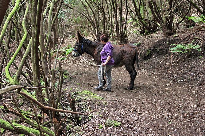 esel-wandern-burros-de-la-luz-la-palma-garafia-31