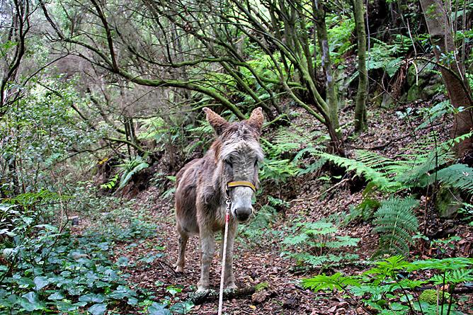 esel-wandern-burros-de-la-luz-la-palma-garafia-42