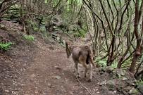 esel-wandern-burros-de-la-luz-la-palma-garafia-45