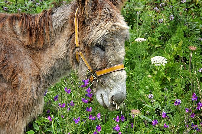 esel-wandern-burros-de-la-luz-la-palma-garafia-48
