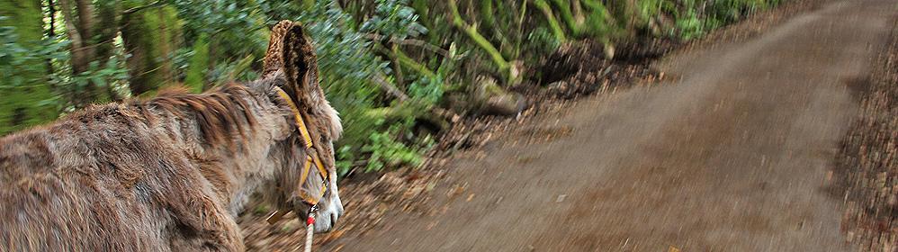 Eselwandern – Burros de La Luz - La Palma Travel