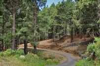 las-cuevas-caminata-el-paso-virgen-del-pino-centro-visitantes-la-palma-104
