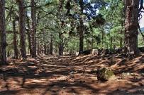 las-cuevas-caminata-el-paso-virgen-del-pino-centro-visitantes-la-palma-109