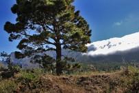 las-cuevas-caminata-el-paso-virgen-del-pino-centro-visitantes-la-palma-20