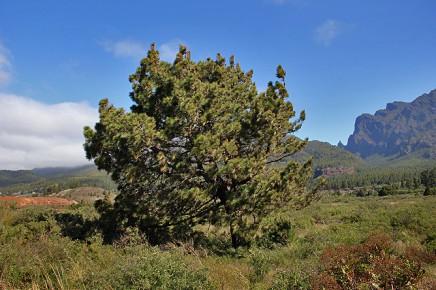 las-cuevas-caminata-el-paso-virgen-del-pino-centro-visitantes-la-palma-23