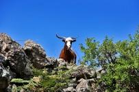 las-cuevas-caminata-el-paso-virgen-del-pino-centro-visitantes-la-palma-44-cabras