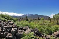 las-cuevas-caminata-el-paso-virgen-del-pino-centro-visitantes-la-palma-55