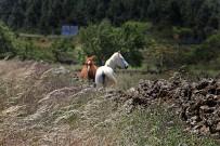las-cuevas-caminata-el-paso-virgen-del-pino-centro-visitantes-la-palma-74-caballo