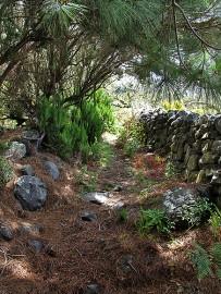 las-cuevas-caminata-el-paso-virgen-del-pino-centro-visitantes-la-palma-85