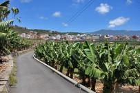 puerto-de-tazacorte-29-bananen-platanos