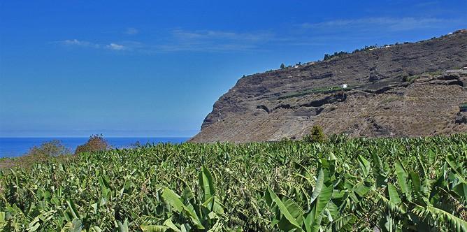 villa-de-tazacorte-47-bananen-platanos-el-time
