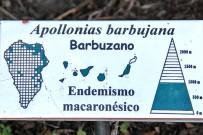 jardin-botanico-el-paso-barbuzano-apollonias-barbujana