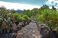 jardin-botanico-el-paso-gaensediestel-cerrajon