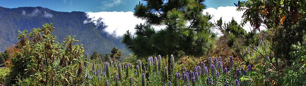 El Jardín Botánico en El Paso - La Palma Travel