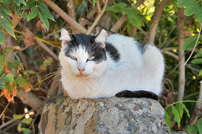 buracas-las-tricias-garafia-la-palma-26-gato