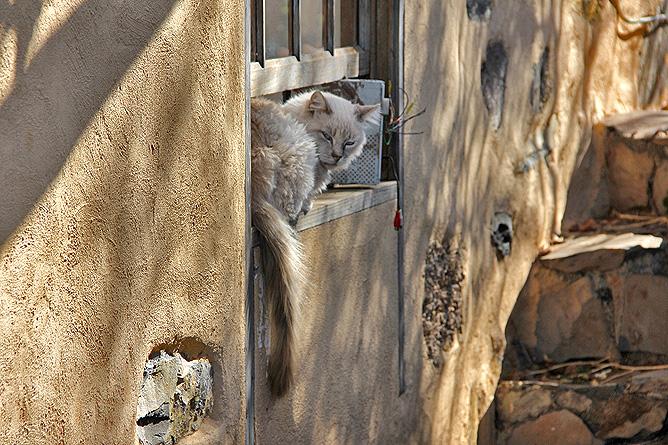 buracas-las-tricias-garafia-la-palma-27-gato