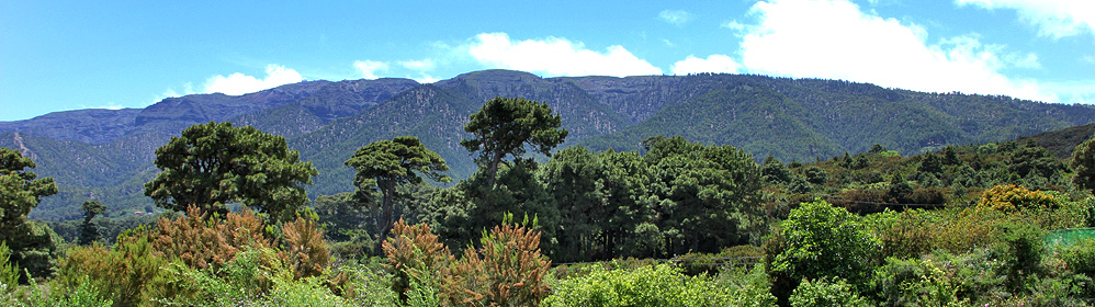 Sabores de Garafía - San Antonio del Monte | La Palma Travel
