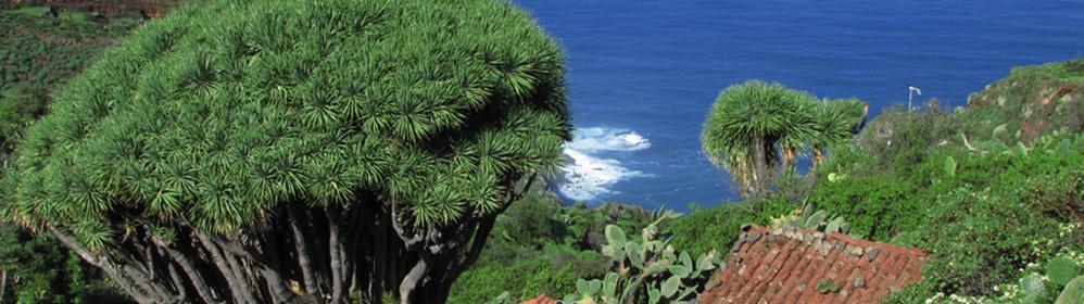 Geführte Wanderungen auf La Palma mit Edieth Kinder