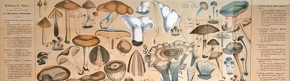 Pilzzentrum Dähncke (Centro de Mycología) - La Palma Travel